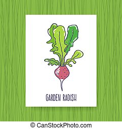 Banner Garden radish. Hand drawn vector illustration.