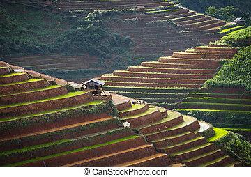 rice - Rice terraces on water season in Mu Cang Chai...