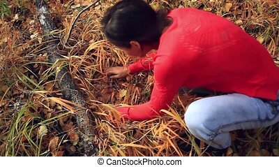 woman picking mushrooms in the field - woman picking wild...