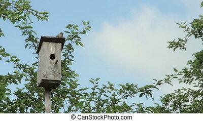 Birdhouse with bird, timelaps - Birdhouse with bird on the...