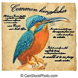 Common Kingfisher - An hand painted vector - An hand painted...
