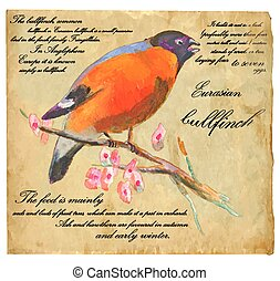 Eurasian Bullfinch - An hand painted vector - An hand...