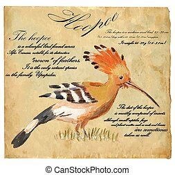 Hoopoe - An hand painted vector - An hand painted...