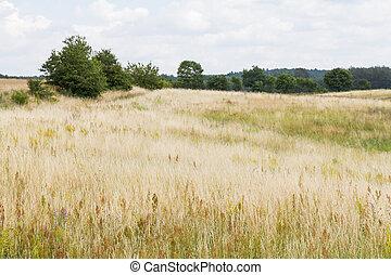 beautiful meadows - Spreewald - meadows in summer in germany...
