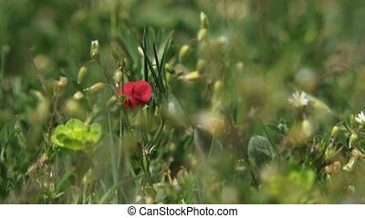 Solitary Red Flower - A beautiful red flower in the middle...