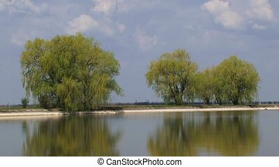 Willows On The Bank - Beautiful willow growing on the bank...