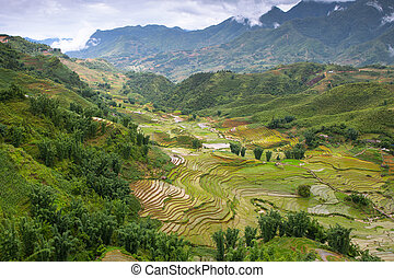 sapa - Rice field terraces at Sapa  , Yen Bai , Vietnam