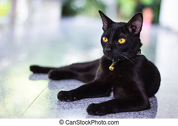 Black male cat show interest at photo camera
