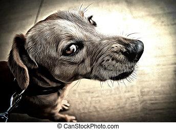 panxito angry  - angry dog