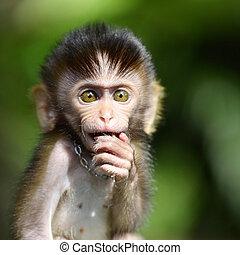 Monkey ball - Baby monkey in a zoo in Thailand
