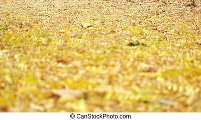 Foliage On The Ground