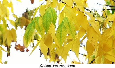 Beginning Of Autumn - The wind blows and shakes the leaves...