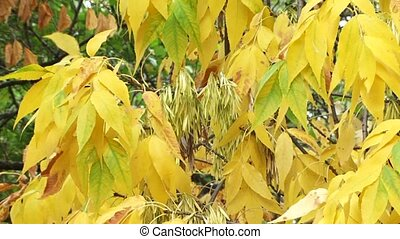 Dried Leaves - The strong wind blows. The turned yellow...