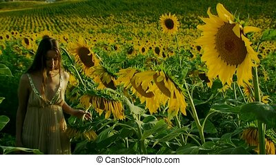 Smells aroma of a sunflower. - A beautiful girl comes out of...