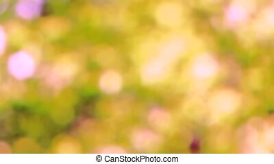 Focus background - Strong defocusing of the camera