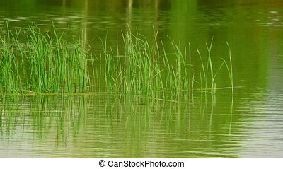 Lake With Reeds - Two frame. In the first frame of the lake...