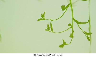Reflection - The plant is reflected in a smooth water...