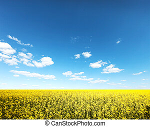 Fiels - Beautiful yellow field with blue sky