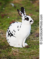 White hare with black dots sitting on green meadow