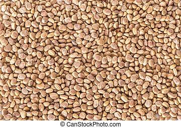 Charoli (Chironji) - Buchanania lanzan - background