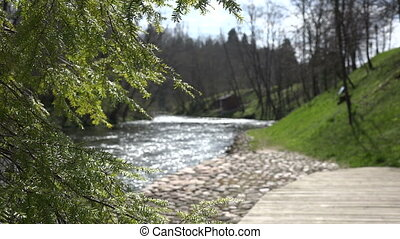 fir tree and rocky stream - green fir tree and flowing...