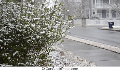 Snow Begins to Accumulate on Bushes - Snow starts to stick...