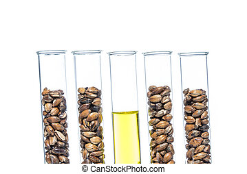 Wheat genetically modified, Plant Cell, science