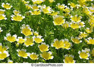 poached egg plant 07