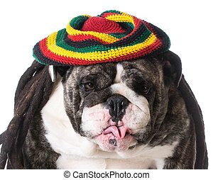 funny dog wearing dreadlock wig on white background -...