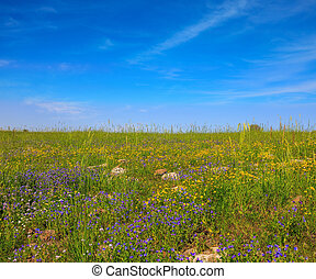 The blossoming Golan heights in a fine sunny day....