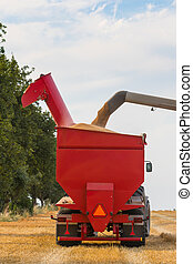 Wheat grains filling tractors trailer - Detail of a part of...