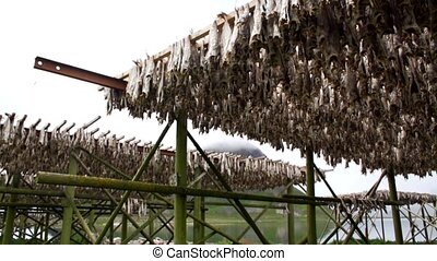 Stockfish on the lofoten norway