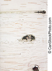 Texture, birch - Texture background pattern birch bark wood...