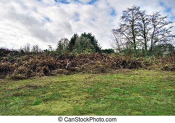 Rural field grass land with shrubs and bushes - Rural field...