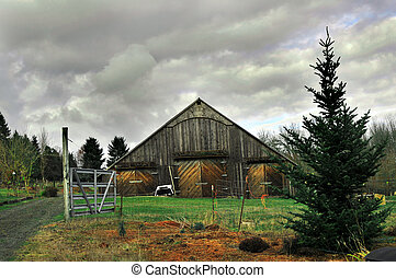 Old  Rural Country Wooden Barn With Tree and Driveway