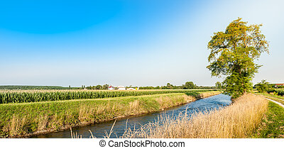 Agricultural landscape with tree, river, fields maise farm...