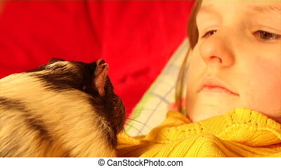 guinea pig at the childs hands