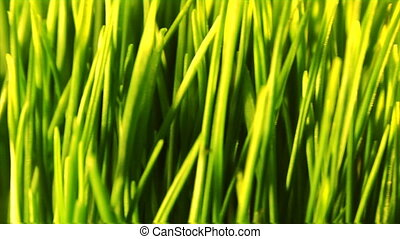 green grass loopable background