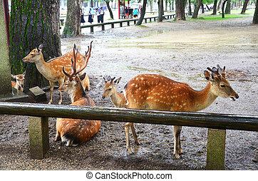 Deers at Kofukuji Temple in Nara, Japan