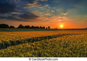 Sunset over a wheat field