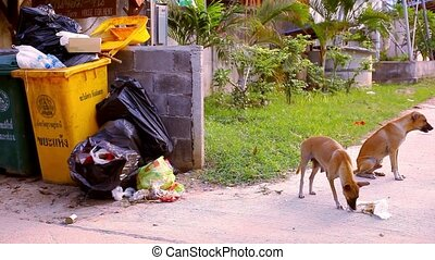 Stray dogs eat the scum around garbage bins