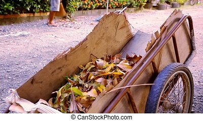 Janitor with broom sweeping fallen leaves and throws in the cart.