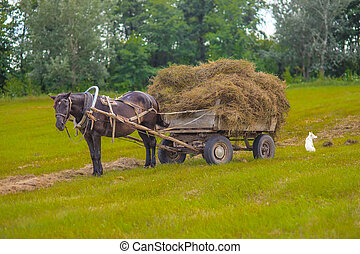 Horse and hay wagon in a field on background , - Horse and...