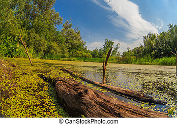 duckweed swamp forest snag sky Russian landscape - duckweed...