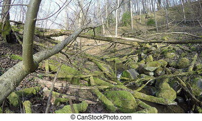 wild brook in forest - Many fallen mossy tree trunks and...