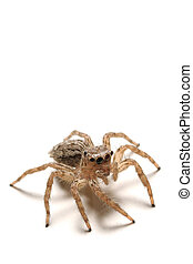 Spider - A loseup shot of a scary spider isolated on white
