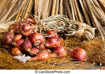 onion - Red onion tuft in still life style