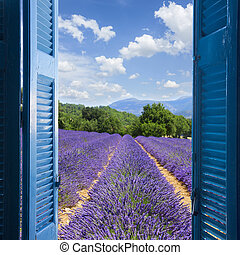Lavender field with summer blue sky through wooden shutters,...
