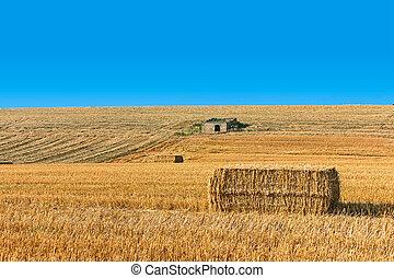 landscape of a wheat field