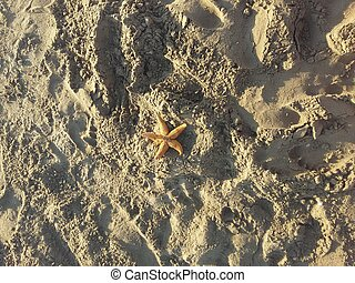 Seastar - Beautiful Seastar in the beach close up